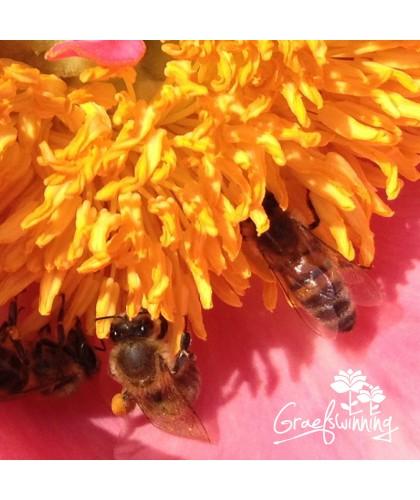 Trio pivoines pour les abeilles