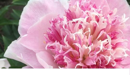 Op zoek naar subtiele bloemsierkunst.
