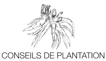 Conseils de plantation