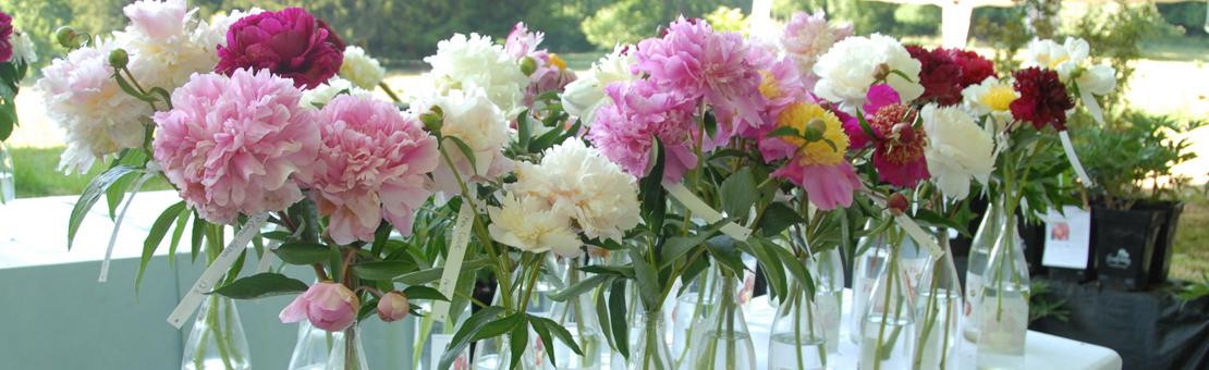Gardenfestival